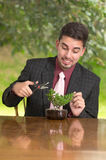 Man is trimming a bonsai tree Royalty Free Stock Images