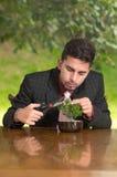 Man is trimming a bonsai tree Stock Photo