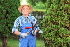 Man trimming a fence in a garden Stock Photos