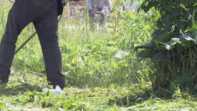 Man trimming grass in a garden using a lawnmower. The man trimming grass in the garden using the lawnmower outdoors stock footage