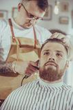 Man during trimming hair. In a barbershop stock photography
