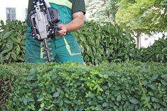 Man trimming hedge Royalty Free Stock Photos