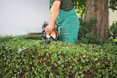 Man trimming hedge_1 Stock Photos