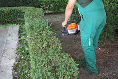 Man trimming hedge_3 Royalty Free Stock Photos