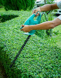 A man trimming hedge with trimmer machine Stock Photo