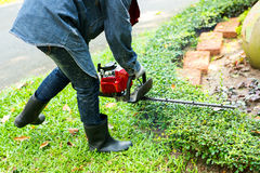 The man trimming hedge with trimmer machine Stock Image
