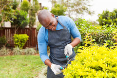 Man trimming plants Stock Image