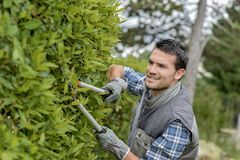 Man trimming side hedge with shears royalty free stock photo