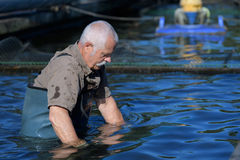 Man at trout fish farm stock photography