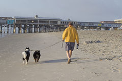 Man with two dogs Royalty Free Stock Photo