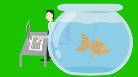 Man Typing on a Computer and a Dead Fish in a Fish Tank on a Green Screen stock footage