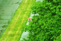 Man with umbrella Stock Photos