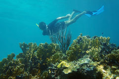 Man underwater snorkeling in a coral reef Royalty Free Stock Photo