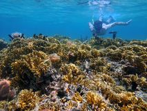 Man underwater snorkeling in a shallow coral reef. Of the Caribbean sea Stock Photos