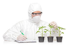 A man in uniform examining a pepper plant Royalty Free Stock Image