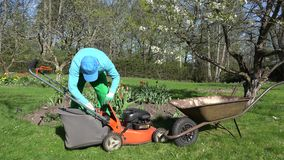 Man unload cut grass into barrow. Lawn mowing in spring. 4K stock video footage