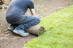 A man unrolling a turf laying a lawn of new grass. Royalty Free Stock Photo