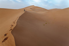 Man up on the dunes in Sahara. Stock Photography