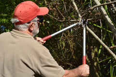 Man use a Tree Pruner Royalty Free Stock Images