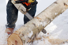 Man using chainsaw. Wood cutting with a chainsaw Stock Images
