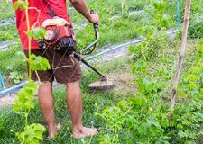 Man using lawn mower cutting grass in garden. Man using lawn mower cutting grass in bitter gourd garden Royalty Free Stock Image