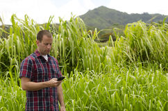 Man utilizing mobile device. Man utilizing smartphone in a tropical environment Stock Images