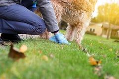 Man val upp/som upp gör ren hundspillning Arkivfoto