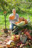 Man with vegetables harvest in  garden Royalty Free Stock Photography