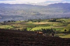 Man vem plogar fältet nära till San Juan de Pasto arkivfoton