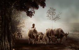 Man, Village, Shepherd, Buffalo Stock Image