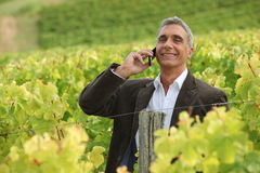 Man in a vineyard. Royalty Free Stock Image