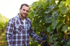 Man in vineyard Stock Photos