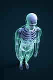 Man with visible skeleton structure Stock Images
