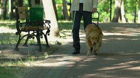 Man with visual impairment walking in park with his specially trained dog, help