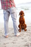 Man with vizsla Stock Photos
