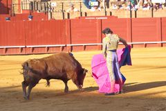 A man vs a bull, Seville, Spain. A man vs a bull. Bullfighting as a national amusement, Seville, Spain Stock Image