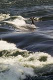 A man wakeboarding on the St. Lawrence river in Montreal. Near Habitat 67. Quebec, Canada Royalty Free Stock Photos