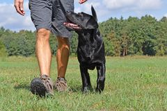 Man walk with dog. In the park at sunny day Stock Photo