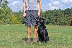 Man walk with dog. In the park at sunny day Stock Photos