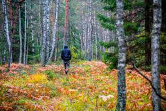Free Man Walk In Fall Woods Royalty Free Stock Photography - 101656347