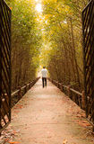 Man walk in to forest Royalty Free Stock Images
