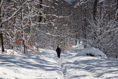 Man at walk on the way in winter forest of Little Carpathian hills Stock Photos