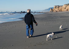 Stroll on the Beach for Exercise. Mature man walking on the sandy beach with his two little white dogs on a windy sunny day, rocky sea shore and ocean waves in Royalty Free Stock Images