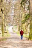 Man walking alone in forest Stock Photo