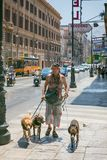 A man walking along a busy street in Palermo leading three dogs Royalty Free Stock Photo