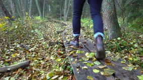 Middle aged man on an ecological nature trail through an autumn forest in a natural park. A man walking along an ecological natural educational trail through the stock footage