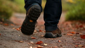 Man walking along a leafy path. In a forest stock video