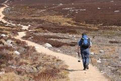 Man walking along path Royalty Free Stock Images