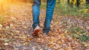 A man stops walking. The girl`s girlfriend`s. Hot girls on the nature in the park among the leaves of yellow. Autumn. A man is walking along a path in the forest Royalty Free Stock Image