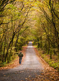 Man walking along a road in the forest Stock Image